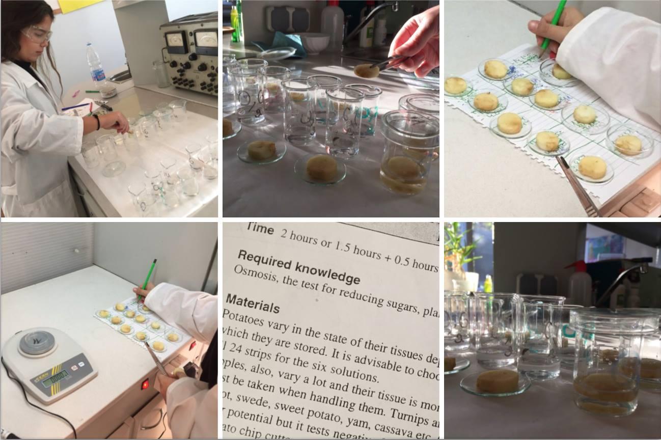Новини от часовете по природни науки в Международно училище Златарски